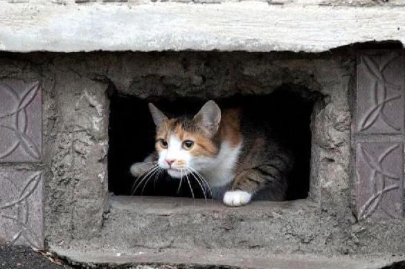 Минстрой запретил убивать кошек в подвалах жилых домов. 385946.jpeg