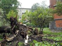 Ураган снес более тысячи деревьев в Москве