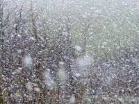 Грузию завалило снегом