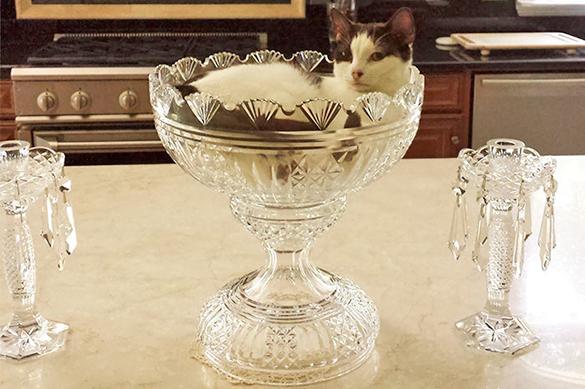 Жидкие коты и крокодилы в казино: за что в этом году вручали Шнобелевскую премию. 375949.jpeg