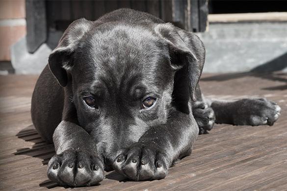 В Мариуполе хозяин закрыл собой собаку от выстрелов