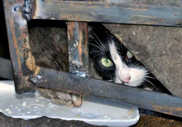 Кошками создадут условия для жизни в подвалах. 400951.jpeg