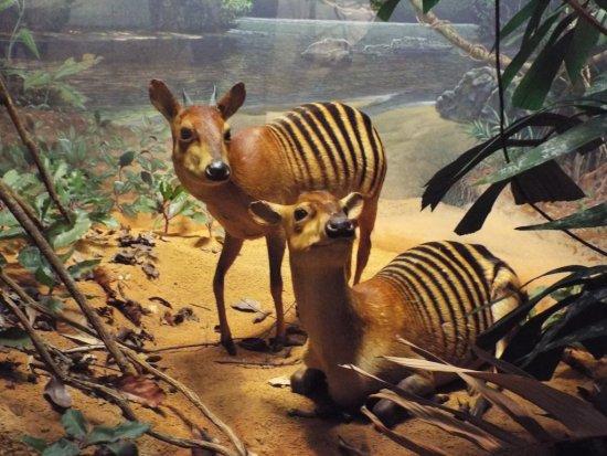 Странные животные, обитающие на планете. 403952.jpeg