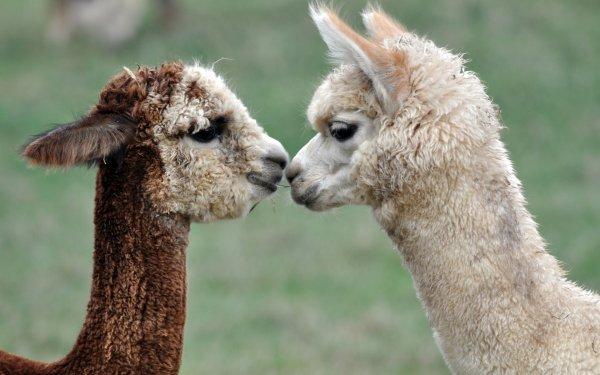 Странные животные, обитающие на планете. 403955.jpeg