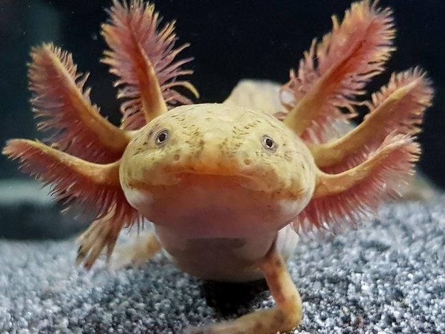 Странные животные, обитающие на планете. 403956.jpeg