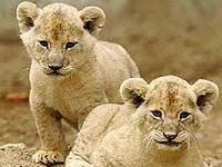 В главный украинский зоопарк прибыли