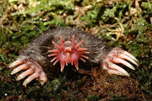 Странные животные, обитающие на планете. 403957.jpeg
