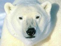 Белый медведь чуть не растерзал солдата