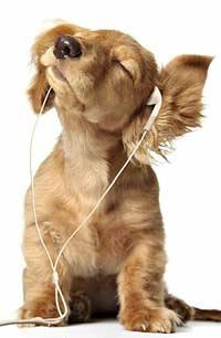 Почему собаки похожи на своих хозяев?