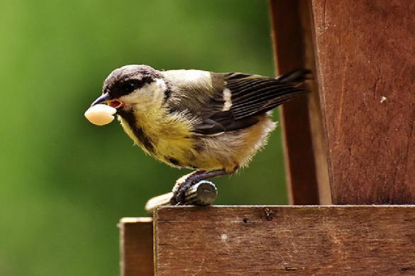 Пьяные птицы устроили погромы в штате Миннесота. 392963.jpeg