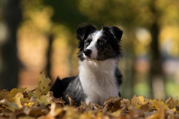 Какие болезни подстерегают собаку осенью. 394965.jpeg