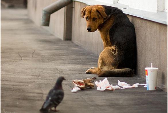 Запрещать кормить бездомных животных — это аморально. 376975.jpeg