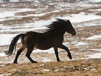 На ранчо в США от голода и холода умерли 96 лошадей. 279976.jpeg