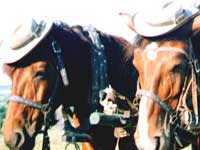 В Берлине приняли трудовой кодекс для лошадей