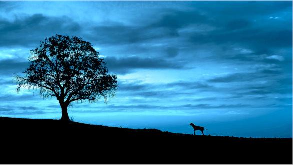 Под иным углом: фотографии, которые помогают ощутить вкус жизни. дерево