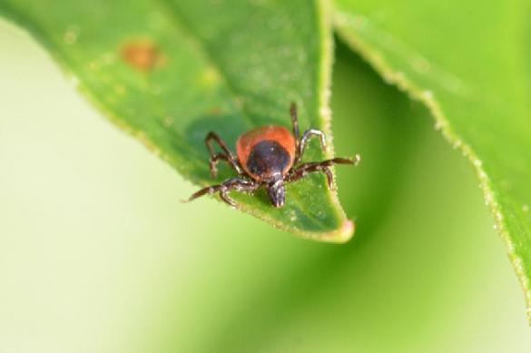 Ученые выяснили, почему насекомых-вредителей почти невозможно уничтожить. 393979.jpeg