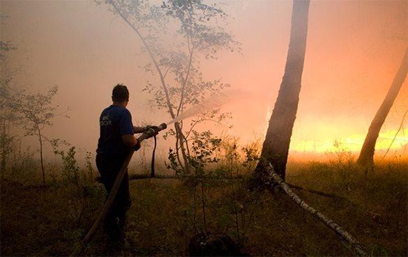 За умышленный поджог леса забайкальцу грозит 10 лет тюрьмы. 317980.jpeg
