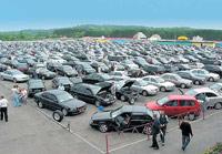 Насекомые-вредители едут в Россию на подержанных иномарках