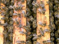 Турецкие спасатели пострадали от укусов пчел