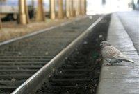 В Норвегии из-за ямы на путях сошел с рельсов поезд. 244987.jpeg