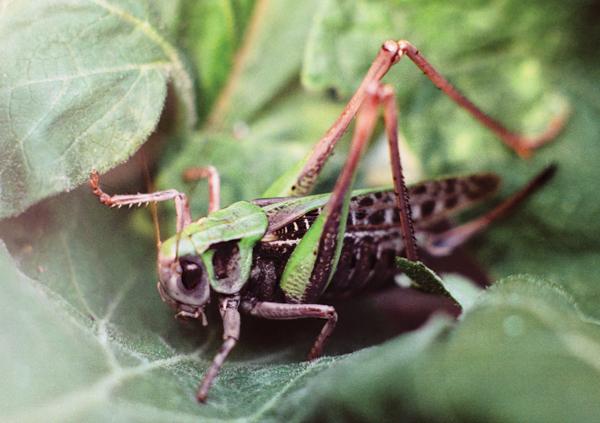 Сочи атакуют полчища насекомых