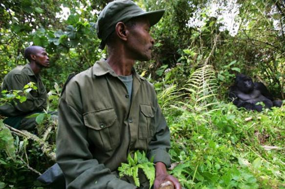 WWF обвинен в финансировании пыток и убийств браконьеров. 399988.jpeg