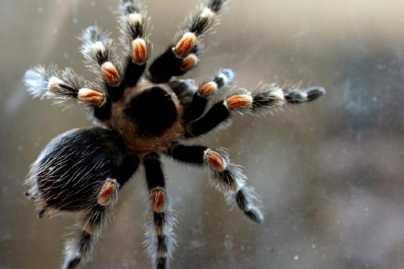 Врожденный страх: змей и пауков боятся даже младенцы. 377989.jpeg