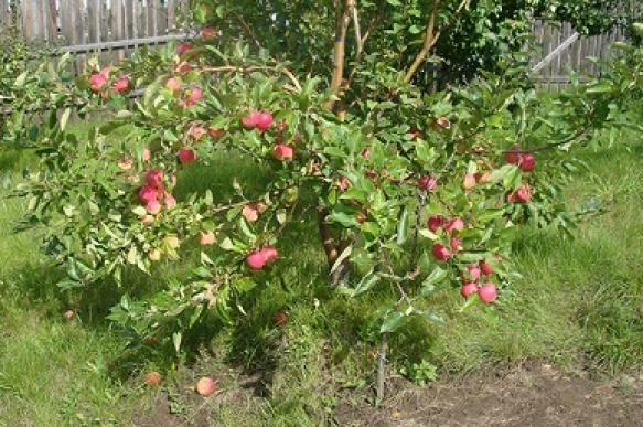 Вопреки природным условиям: делаем стелющийся сад. 394989.jpeg