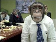 Интересное за неделю: обезьяну отправят покорять космос. 240992.jpeg