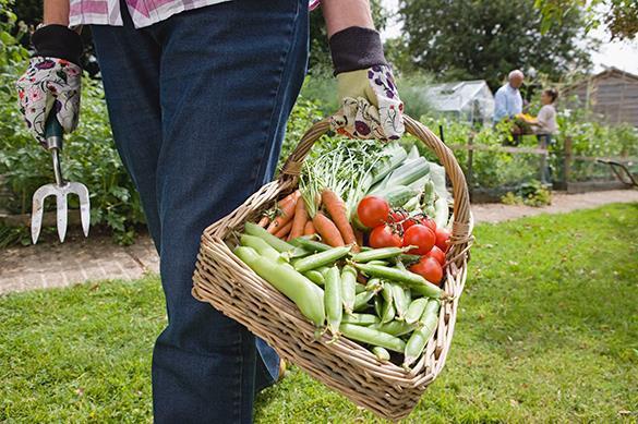 Турции разрешили поставить в Россию ряд овощей. Турции разрешили поставить в Россию ряд овощей