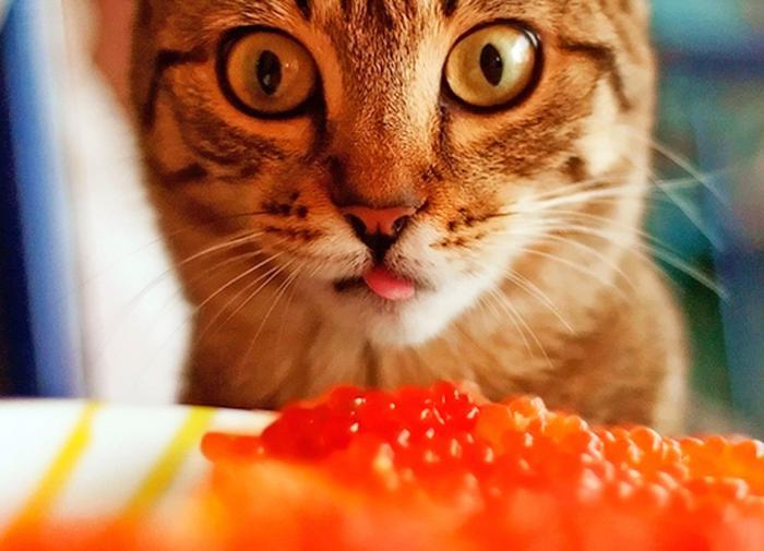 Литовское чистилище: агенты ЦРУ пытали пленных в Прибалтике?