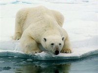 В Арктике появятся отели для туристов. 264995.jpeg