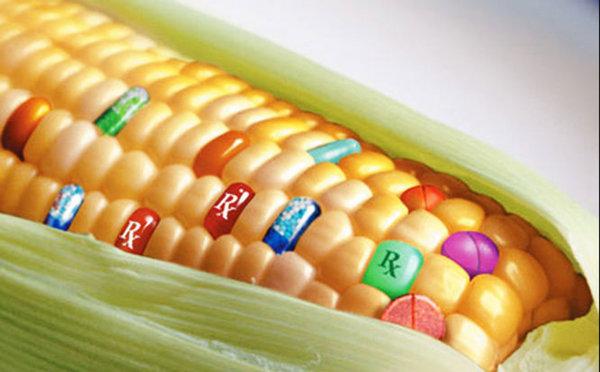 ГМО необратимо изменит мир. гмо