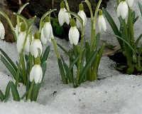 Россиян ждет теплый апрель