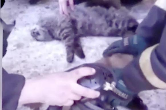 Спасателей Магадана наградили за реанимацию котов.
