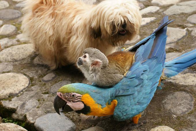 Верхом на попугае