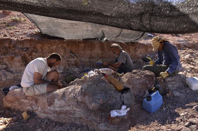 Раскопки. Найдены останки крупнейшего динозавра на планете