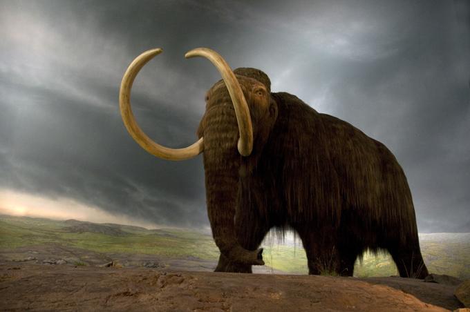 Тайна гибели мамонтов