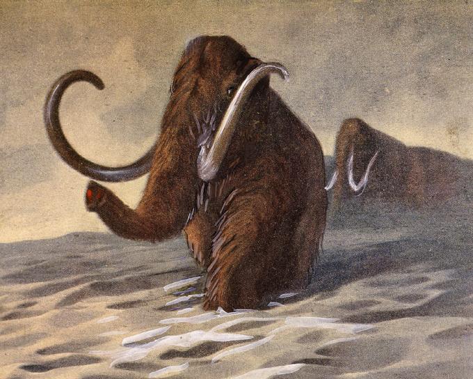 Открытки дню, открытки с мамонтом
