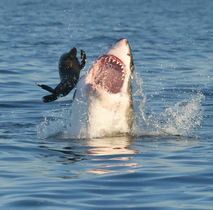 родилась охота на акул фото всячески пытается