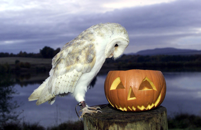 Хэллоуин - праздник для животных
