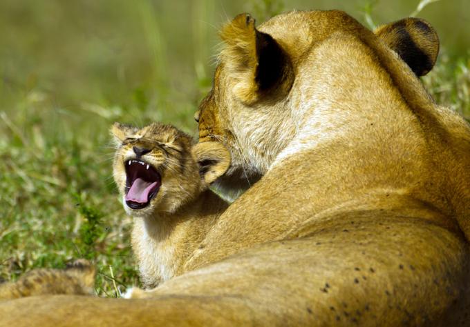 Смертельная материнская любовь