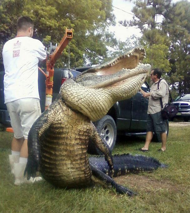 Ловись, крокодил, большой и маленький! Удачная охота