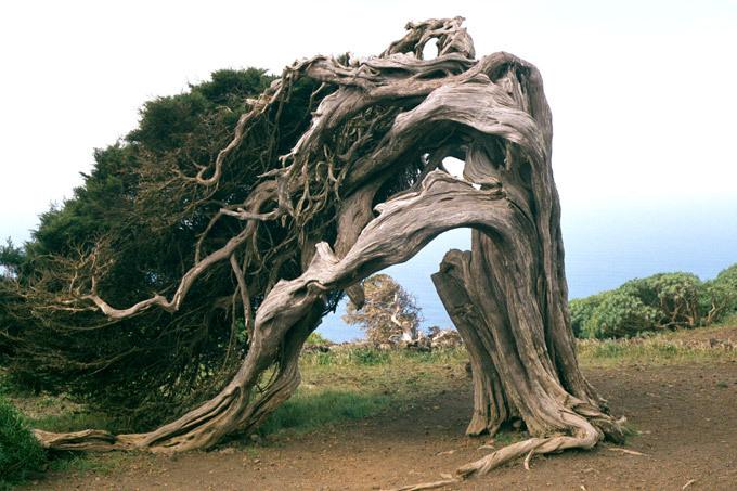 Деревья, похожие на живых существ