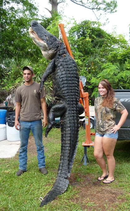 Ловись, крокодил, большой и маленький! Порыбачили...