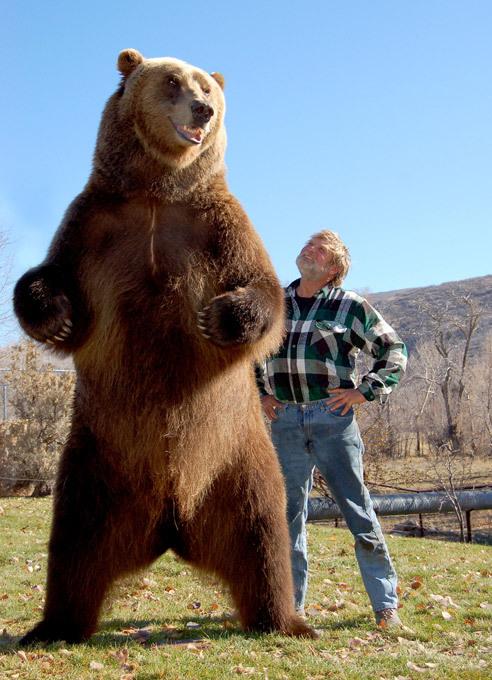 Как сделать другом... медведя