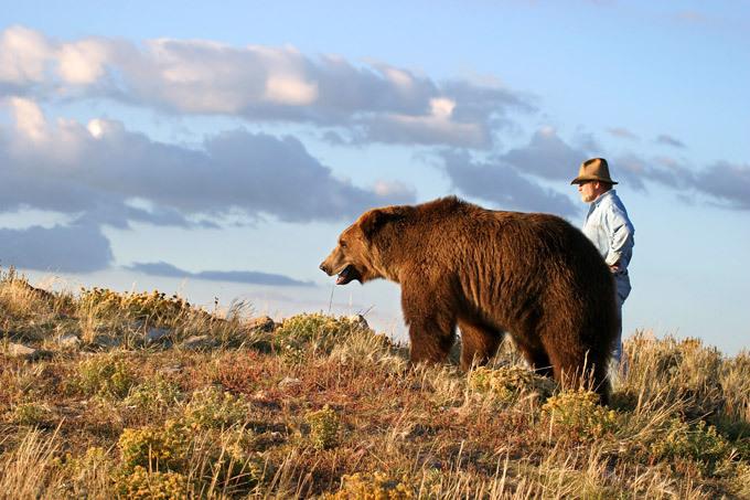 гризли медведь фото с человеком гулянье