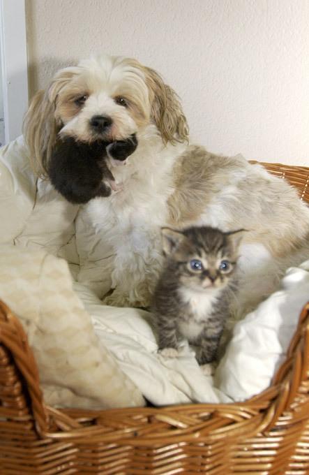 Собачья мама для ласковых котят. Рассказы о животных