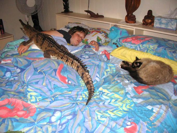 Сделать крокодил домашних условиях