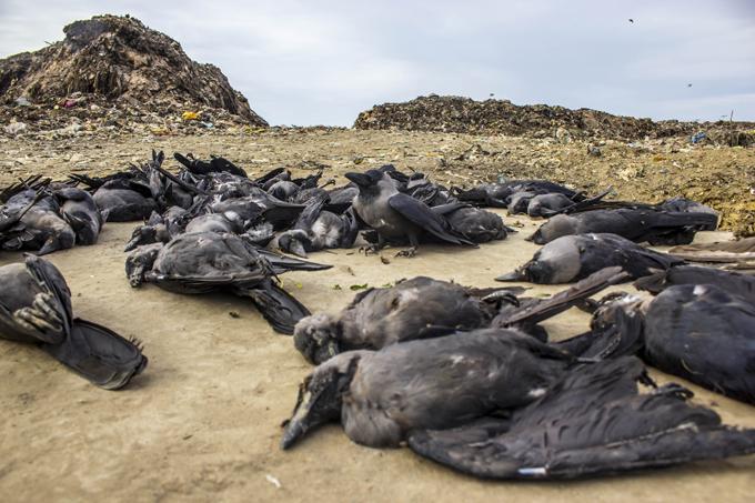 Таинственные места планеты: Долина падающих птиц